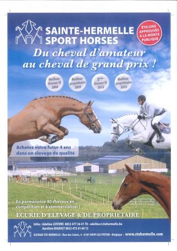 Du cheval d'amateur au cheval de grand prix !